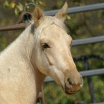 Shallow Creek's Alexis - $3500