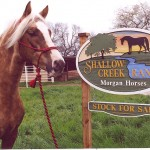 Shallow Creek's Cuervo Gold
